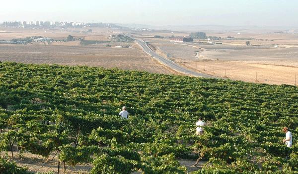 Agroalimentario