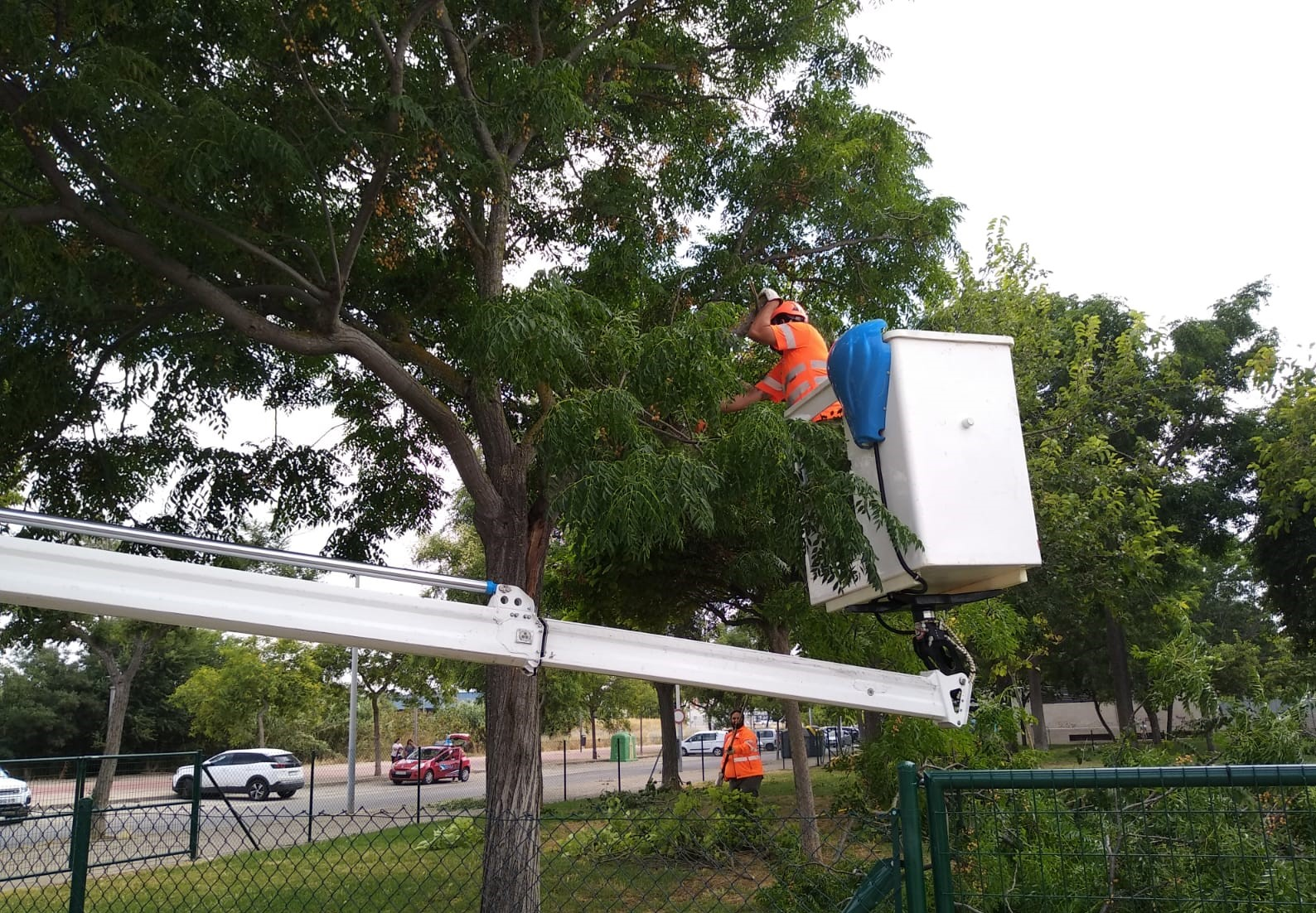 Trabajadores realizando labores en un parque