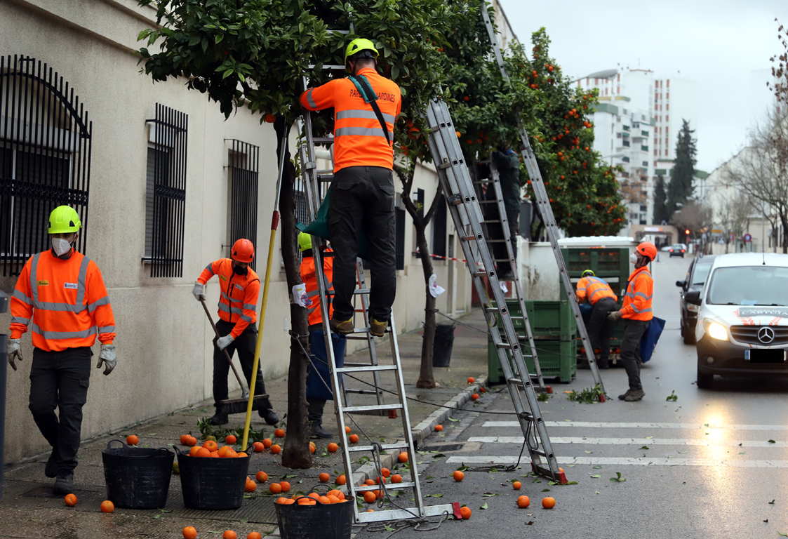 Campaña recogida naranjas