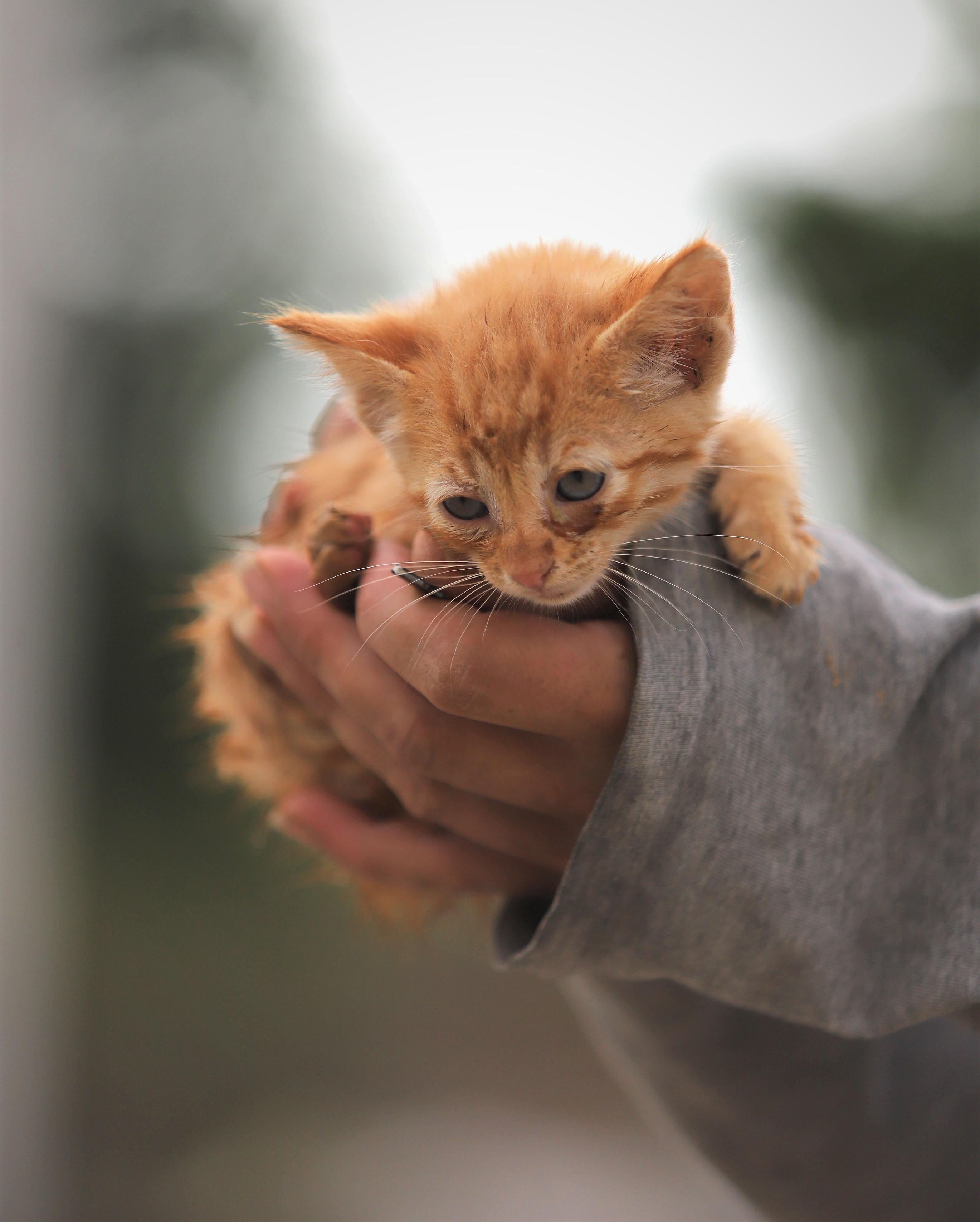 Club Mascotas-Julio5-1-gatito