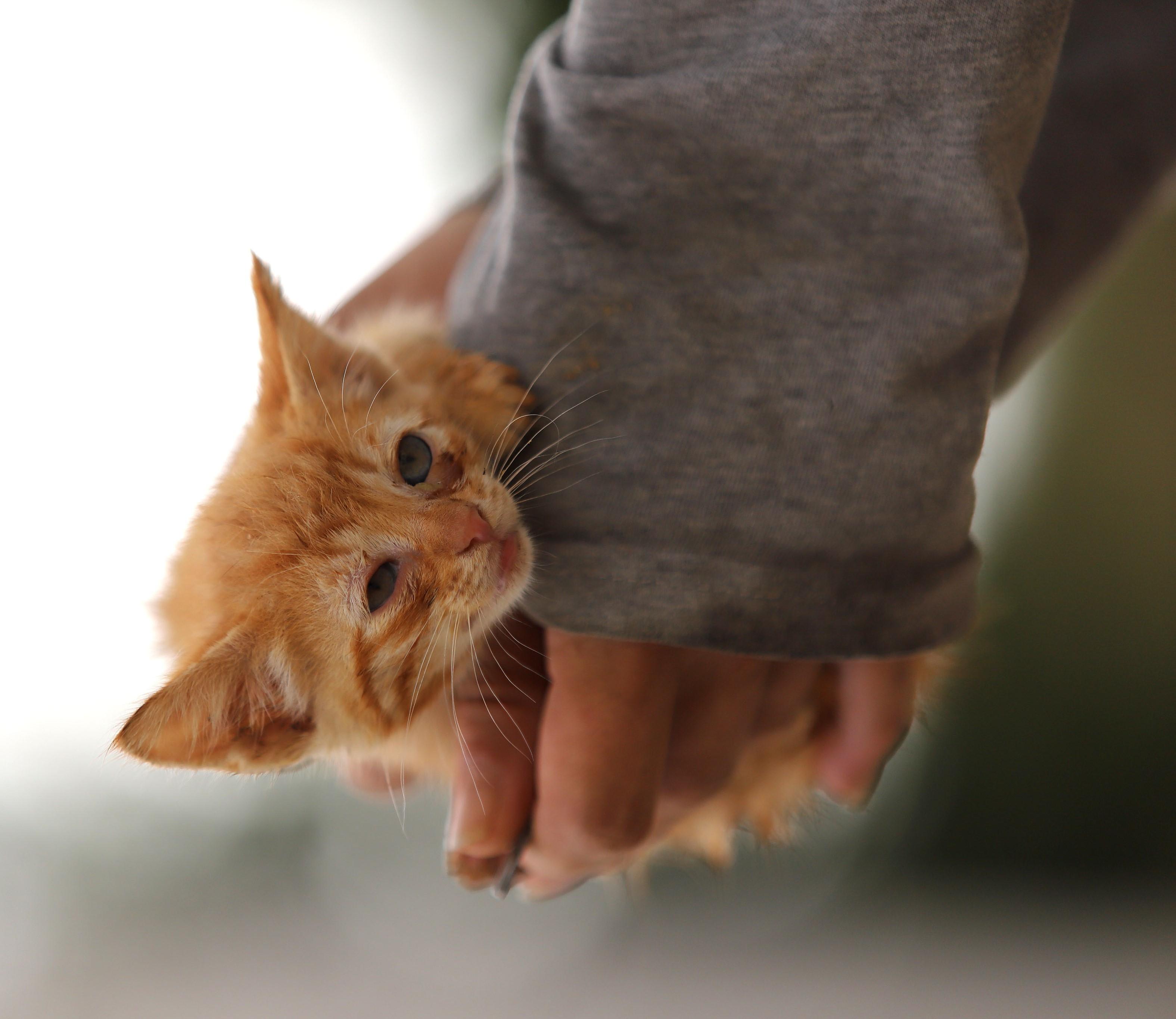Club Mascotas-Julio5-2-gatito