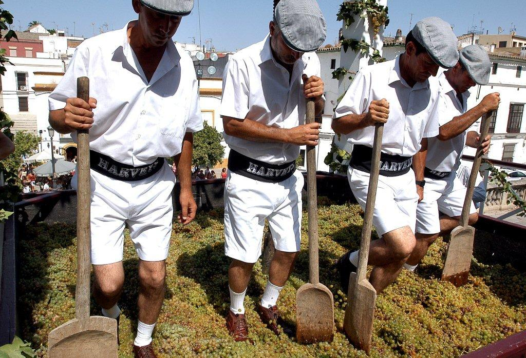 Tradicional Pisa de la Uva